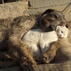 doggy & cat