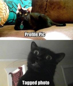 cat funny pic