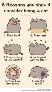 cat funny2